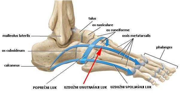 deformiteti-stopala-svodovi